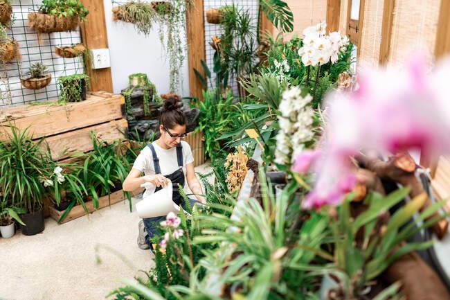 Сверху молодая садовница улыбается и поливает цветущие цветы и растения во время работы в деревянной оранжерее — стоковое фото