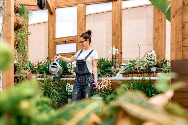 Dal basso il giardiniere femminile giovane che sorride e annaffia fiori fiorenti e le piante durante lavoro in aranciera di legno — Foto stock