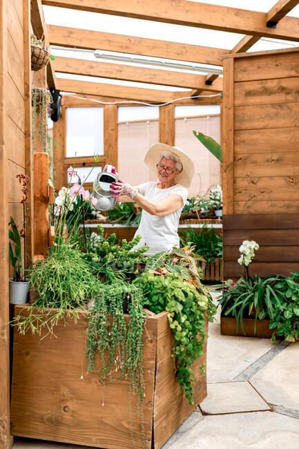 Веселый пожилой садовник улыбается и поливает зеленые растения на деревянной террасе — стоковое фото