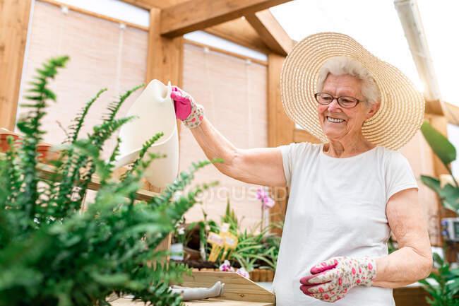 Allegro giardiniere anziano sorridente e irrigazione piante verdi sulla terrazza in legno — Foto stock