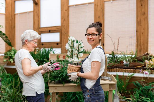 Donna guardando la macchina fotografica e portando fiore in vaso mentre matura signora taglio pianta foglie durante il lavoro in serra di legno — Foto stock