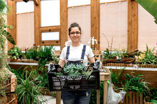 Donna adulta felice sorridente guardando la fotocamera e portando scatola di plastica con succulente mentre si lavora in serra di legno — Foto stock