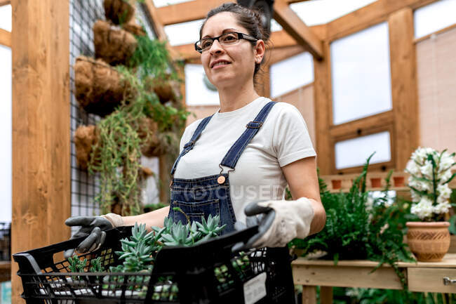 Adult happy woman smiling looking away and carrying plastic box with succulents while working in wooden greenhouse — Stock Photo