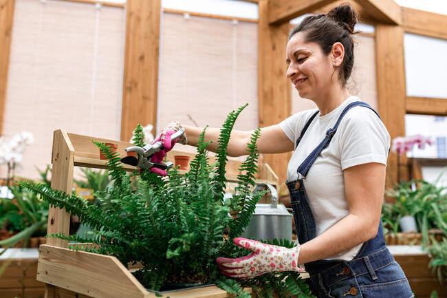 Бічний вид щасливої брюнетки жінка посміхається і різання листя потовченого папороті під час роботи в будинку — стокове фото