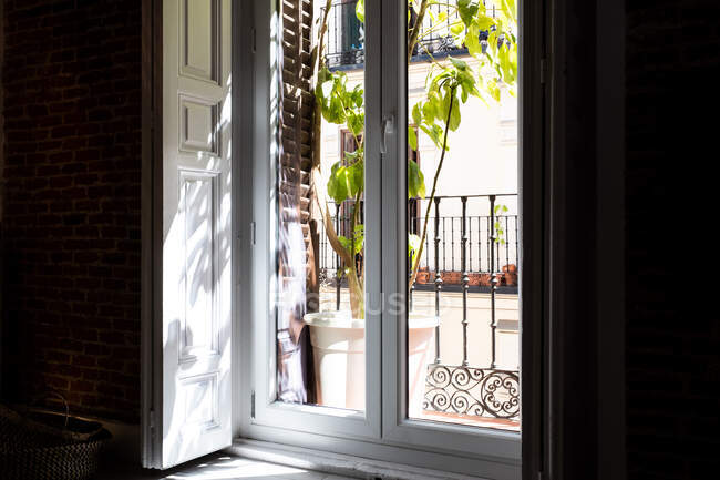 Closed glass door leading from apartment to small balcony with potted plant on sunny day — Stock Photo