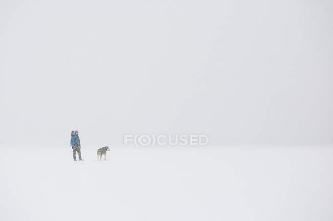 Anonymous person and siberian husky dog while walking on white snow during storm on cold winter day in nature — Stock Photo
