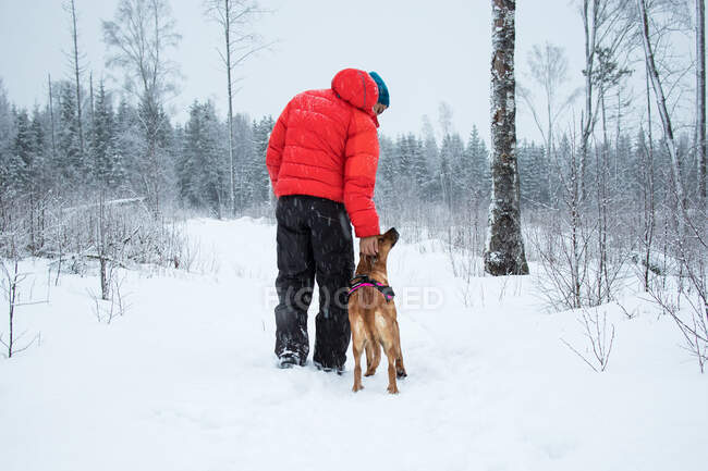 Back view of male in black and red outerwear scratching head of dog while walking on white snow near forest on cold winter day in nature — Stock Photo
