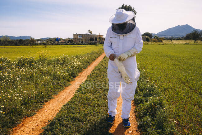 Unrecognizable beekeeper in white costume putting on protective gloves while standing on green grassy meadow and preparing for working on apiary — Stock Photo