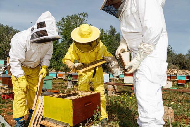 Grupo de apicultores irreconhecíveis em trajes de proteção e máscaras usando fumante enquanto inspeciona favo de mel no apiário — Fotografia de Stock