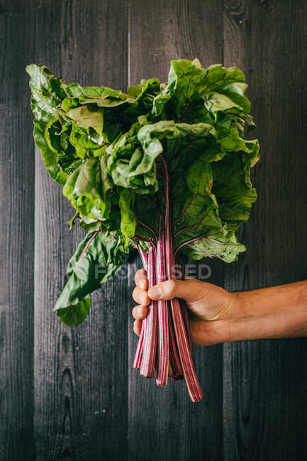 Unrecognizable person holding and showing a bunch of healthy fresh beetroot leaf against black lumber wall — Stock Photo
