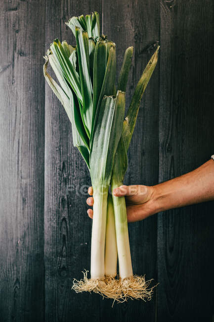 Unrecognizable person holding and showing a bunch of healthy fresh leek against black lumber wall — Stock Photo