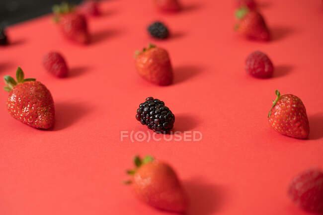 Zarzamora fresca colocada en línea con fresas maduras en composición de bayas de verano sobre fondo de superficie roja - foto de stock