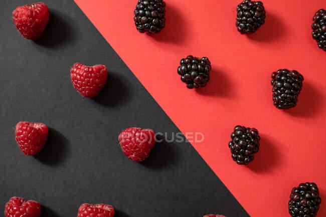 De arriba la mora fresca y la frambuesa madura colocan entre la división del fondo negro y rojo en la composición veraniega de las bayas - foto de stock