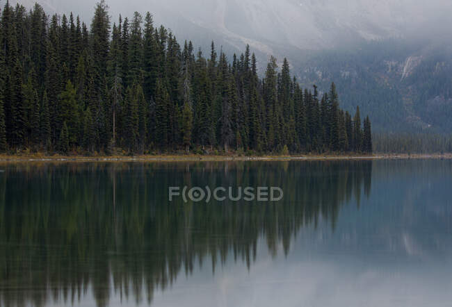 Picturesque scenery with coniferous forest reflecting in lake water — Stock Photo