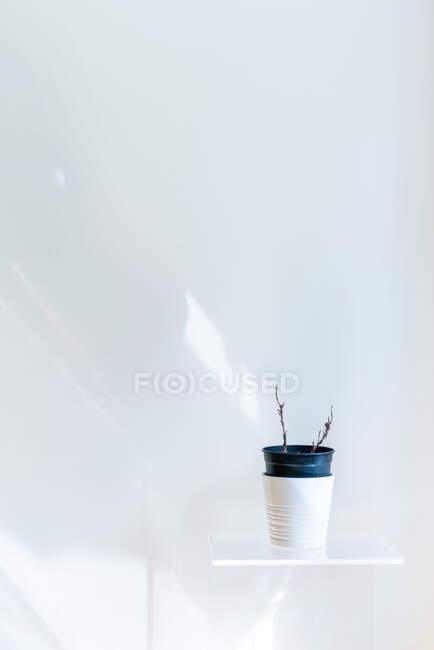 Planta seca en maceta en estante blanco en pared blanca - foto de stock