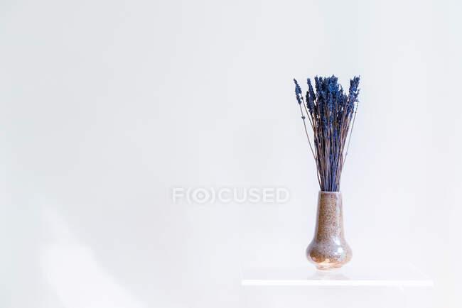 Полка с вазой сухих цветов на белой стене — стоковое фото
