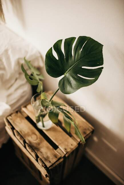 From above glass with fresh water and green monstera leaves placed on lumber box against wall in bedroom — Stock Photo