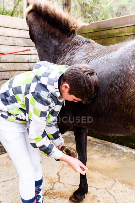 Teen jockey removing dirt from horse hoof while standing in wooden stall after training in equestrian school — Stock Photo