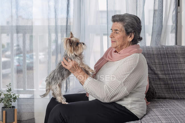 Happy elderly female with adorable Yorkshire Terrier while sitting on sofa at home during coronavirus pandemic — Stock Photo