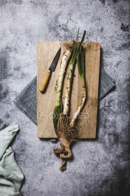 Draufsicht auf ein Bündel reifer, schmutziger Calsot-Zwiebeln auf Tablett und Leinentuch auf einem Holztisch in der Nähe von Messer in Katalonien, Spanien — Stockfoto
