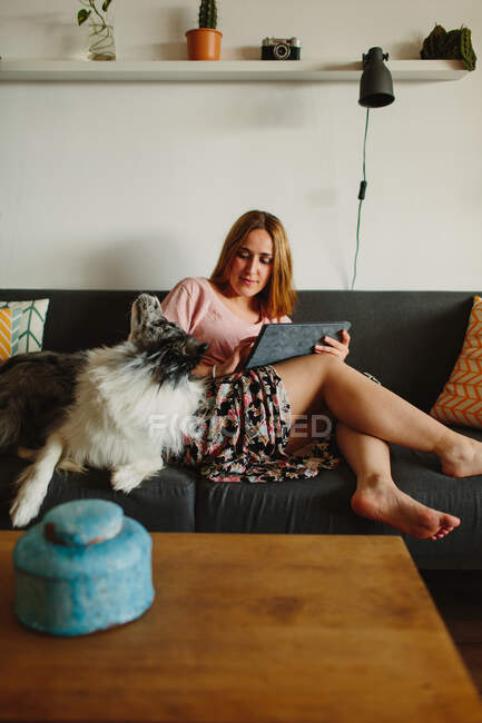 Positive barefoot woman with tablet smiling and petting cute Collie while sitting on comfortable sofa at home — Stock Photo