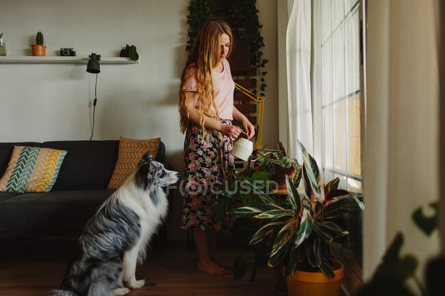Женщина с длинными волосами льет воду на зеленые растения, стоя рядом с послушным Collie в уютной комнате дома — стоковое фото