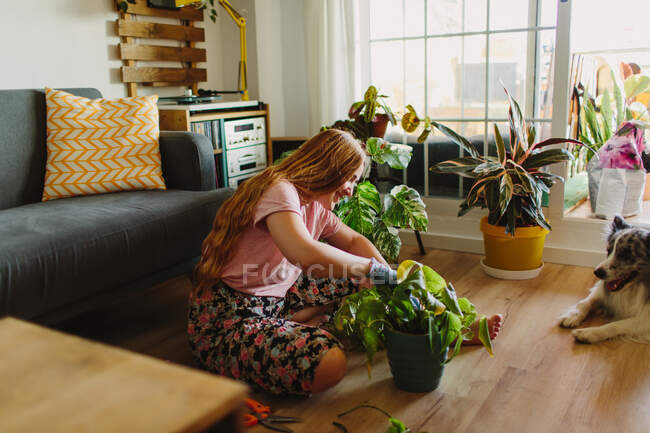 Side view of barefoot woman with long hair sitting on floor near furry Collie and tending potted plant with dry leaves in cozy living room at home — Stock Photo