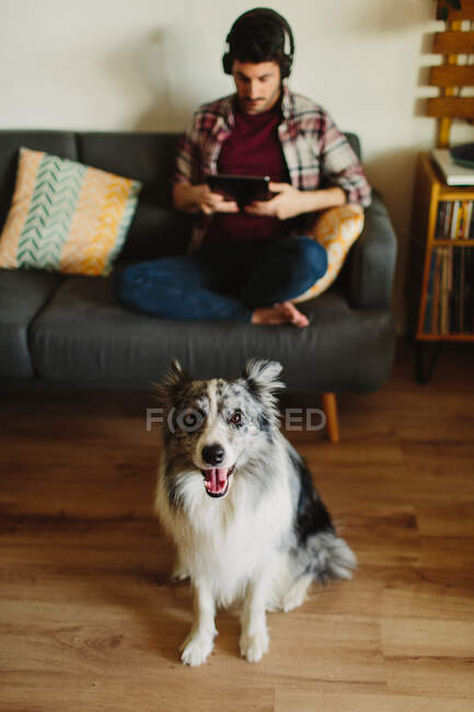 From above cute fluffy Collie looking at camera while standing on blurred background of resting male owner at home — Stock Photo