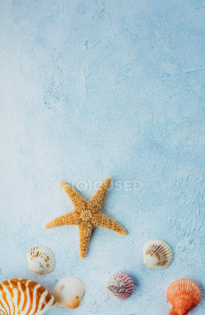 Top view of colorful seashells and dried starfish placed on blue stucco surface on summer day — Stock Photo