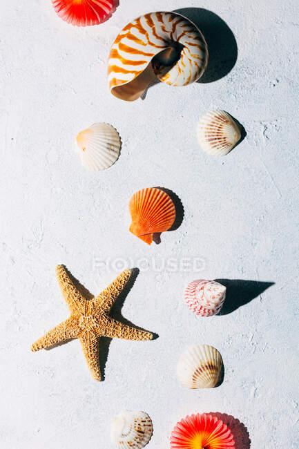 Draufsicht auf bunte Muscheln und getrocknete Seesterne, die an Sommertagen auf weißer Stuckoberfläche platziert werden — Stockfoto