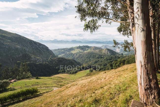 Vue sur la forêt verte et les montagnes — Photo de stock