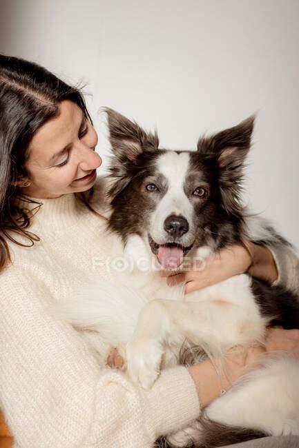 Догляд за самицею в шерстяному светрі обіймає кумедний прикордонний собака Коллі, сидячи на дерев'яній підлозі разом. — стокове фото