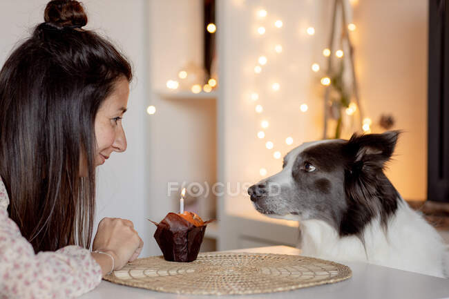 Side view of delighted female sitting at table with muffin and celebrating birthday together with border collie while staying home during quarantine — Stock Photo