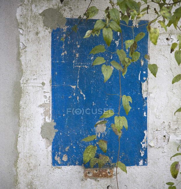 Thin vines against grungy wall — Stock Photo