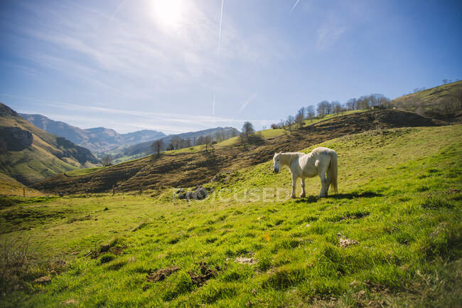 Gorgeous white horse grazing on remote lush green meadow on sunny valley in highlands of Spain — Stock Photo