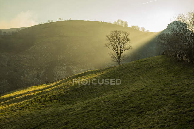 Tranquil hazy view of green trees and hills covered with grass and illuminated with sun in Cantabria — Stock Photo