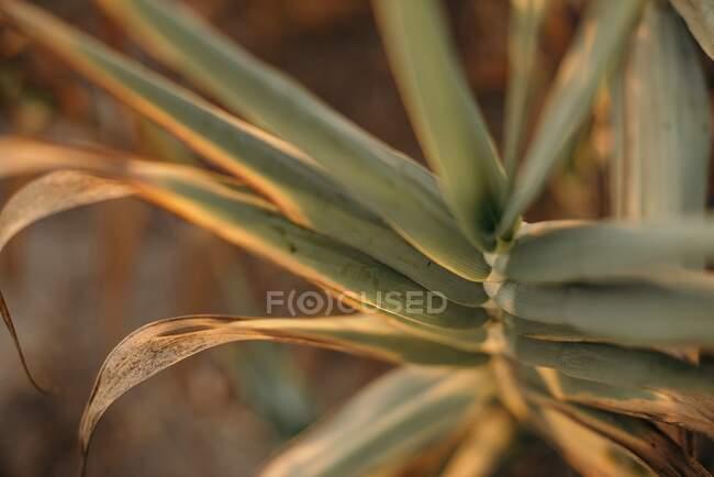 Feuilles de palmier dans la lumière chaude du coucher du soleil — Photo de stock