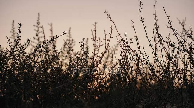 Стебла силуетів, природне тло. — стокове фото