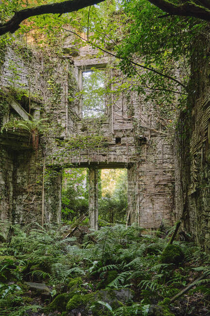Ancient light brown construction with three wall openings surrounded by thickets of plants and big tree on sunny day in afternoon — Stock Photo