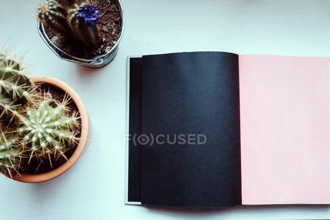 Сверху вечнозеленые колючие цветы в композиции с книгой с пустыми черно-бежевыми страницами на белом столе в светлом современном офисе — стоковое фото