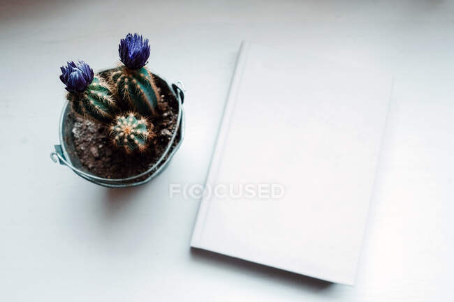 From above evergreen prickly potted flowers in composition with book on white table in light modern office — Stock Photo