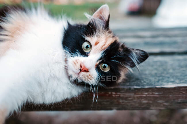 White local cat with black and red spots lying on wooden street bench and lazily stretching while looking at camera with smart look in Turkey in Istanbul — Stock Photo