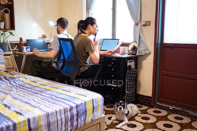 Asiática hembra en ropa casual sentada cerca de perro en la mesa con novio enfocado mientras trabaja en el dormitorio en el dormitorio - foto de stock