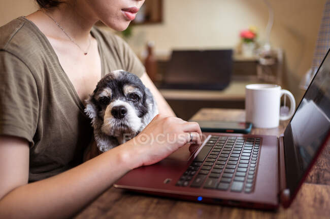 Side view of cropped unrecognizable focused female freelancer working remotely on laptop sitting on chair while holding dog — Stock Photo
