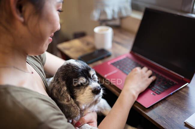 Dall'alto ha ritagliato il collaboratore esterno femminile allegro che lavora a distanza su computer portatile che si siede su sedia mentre tiene il cane — Foto stock