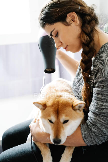 Happy ethnic smiling female holding dog with hand wrapped with white towel after shower and drying fur with hairdryer while Shiba Inu patiently waiting and looking at camera — Stock Photo