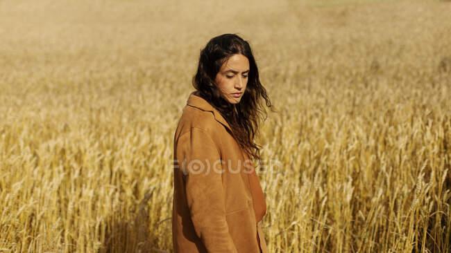 Señora joven reflexiva en chaqueta elegante y cabello rizado marrón de pie en medio del campo de centeno de oro sin fin y mirando hacia abajo - foto de stock
