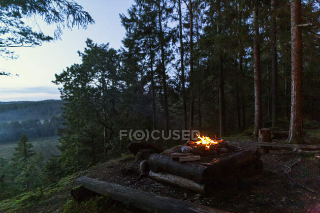 Picturesque landscape of bright campfire flame surrounded by evergreen trees in camping located in woods — Stock Photo