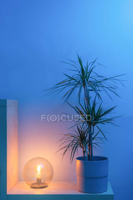 Small round table lamp lighting and standing on wooden shelf with potted houseplant against blue wall in cozy living room at home during twilight — Stock Photo