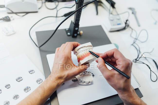 Von oben von der Ernte anonymer Zahnmedizinstudent mit Gebiss während der Ausbildung Fähigkeiten in modernen Labor — Stockfoto